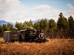 trees, viewes, Mountains, forest, locomotive
