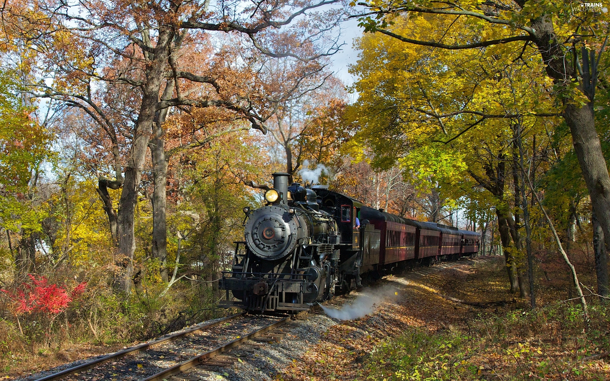 Wagons, locomotive, trees, viewes, track, steam